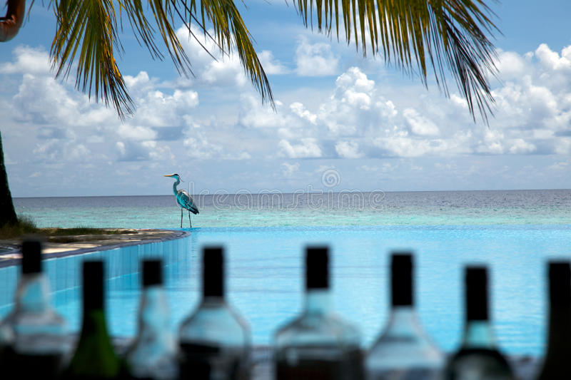 Infinity Pool bar!. Infinity Pool bar view with a crane in background royalty free stock images