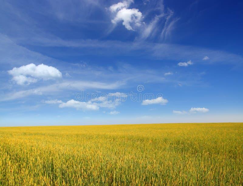 Infinity wheat field stock photo