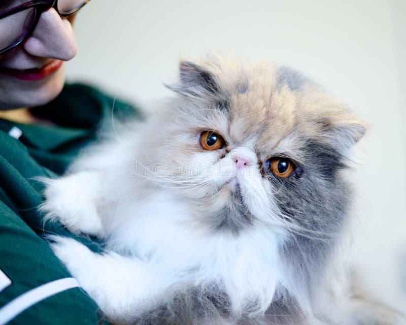 Infirmière vétérinaire tenant le chat persan photographie stock