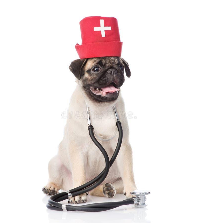 Infirmières de port chapeau et stéthoscope médicaux de chiot de roquet D'isolement sur le blanc photo stock