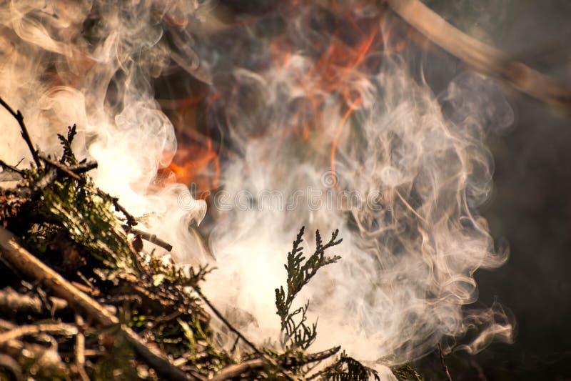 Inflame o fogo Tiro macro da fogueira, do carvão branco do fumo, os quentes, da incandescência e do fogo fotografia de stock