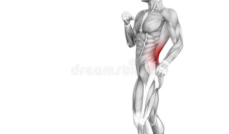 Inflammation d'un rouge ardent de tache d'anatomie humaine arrière illustration de vecteur