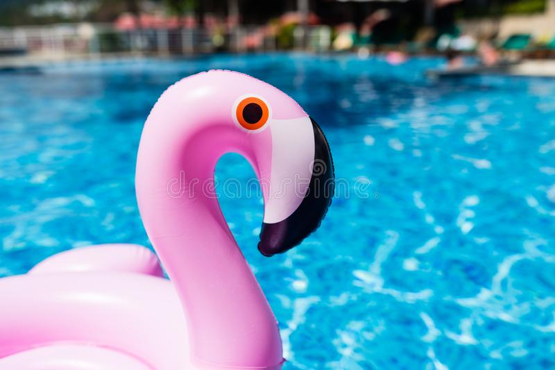 Inflatable pink flamingo at the swimming pool. Summer time in the swimming pool with plastic toys. Relaxation, holiday, vacation royalty free stock image