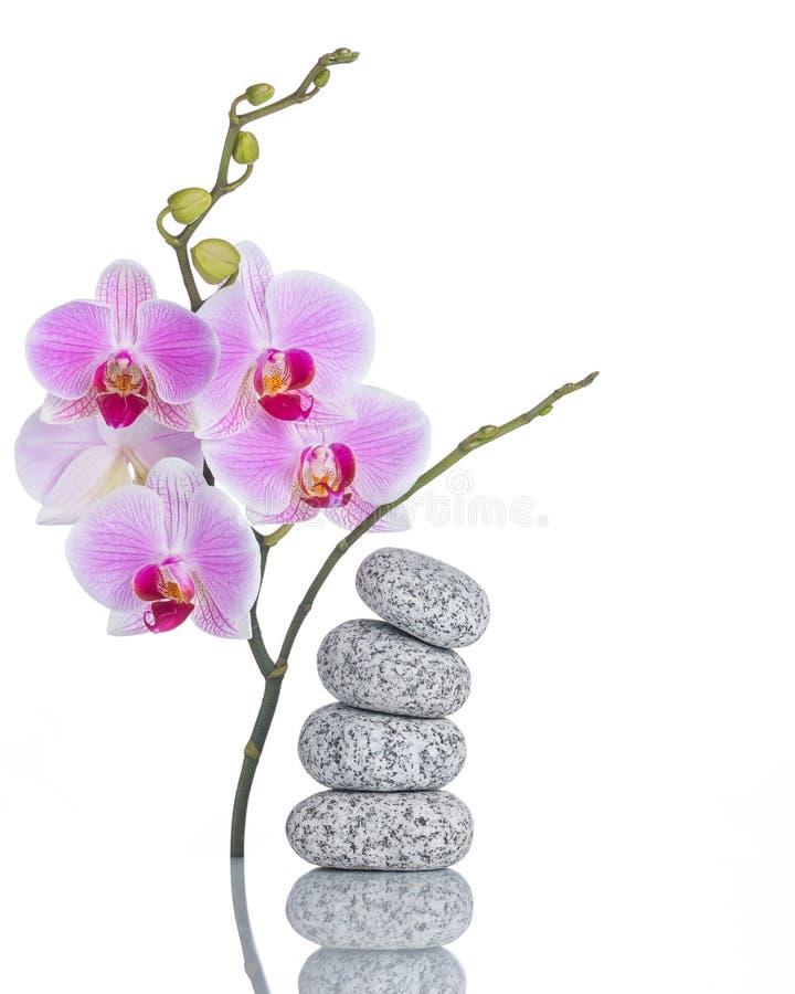 Inflorescência das pedras da orquídea e da massagem de borboleta com reflexão isoladas no fundo branco foto de stock royalty free