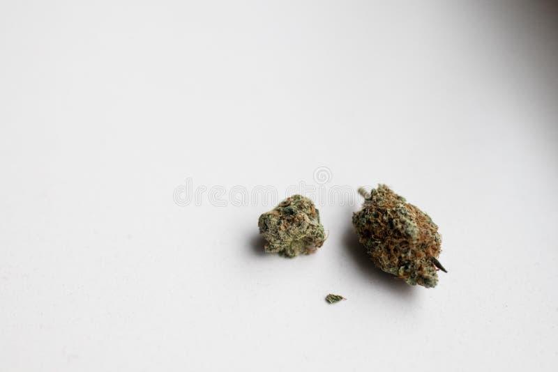 Inflorescence av laglig cannabis i holland på en vit bakgrund arkivbilder