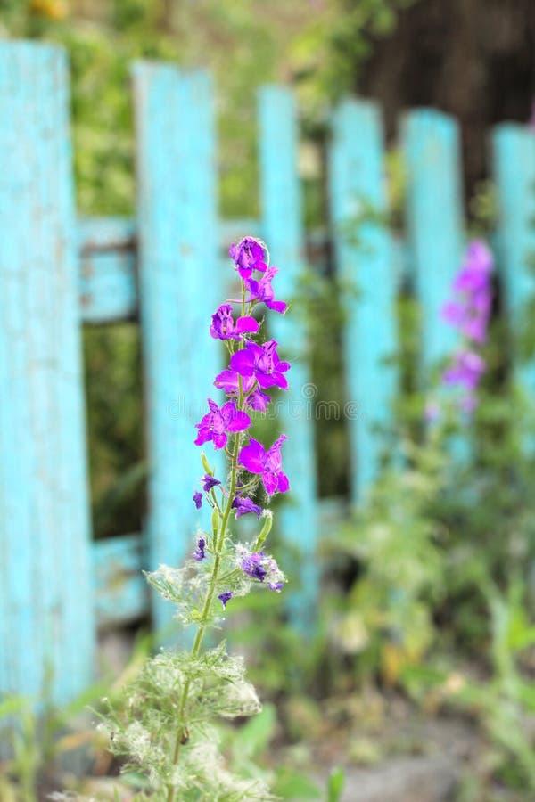 Inflorescencia de flores rosadas en el fondo imagen de archivo libre de regalías
