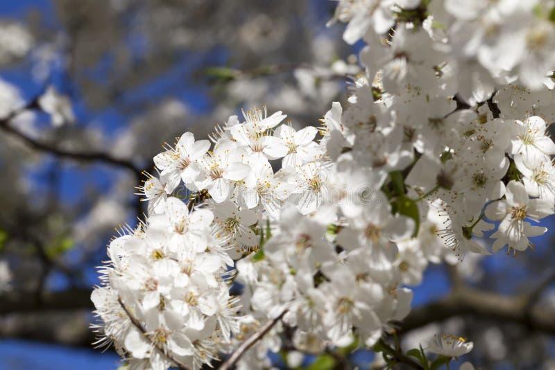 inflorescencia del árbol fotos de archivo libres de regalías