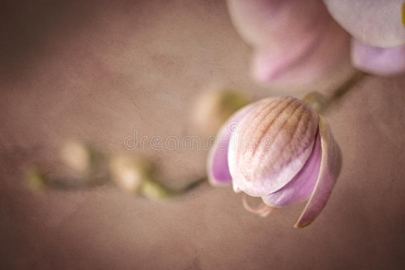 Influência silenciado do Grunge das flores cor-de-rosa da orquídea foto de stock royalty free