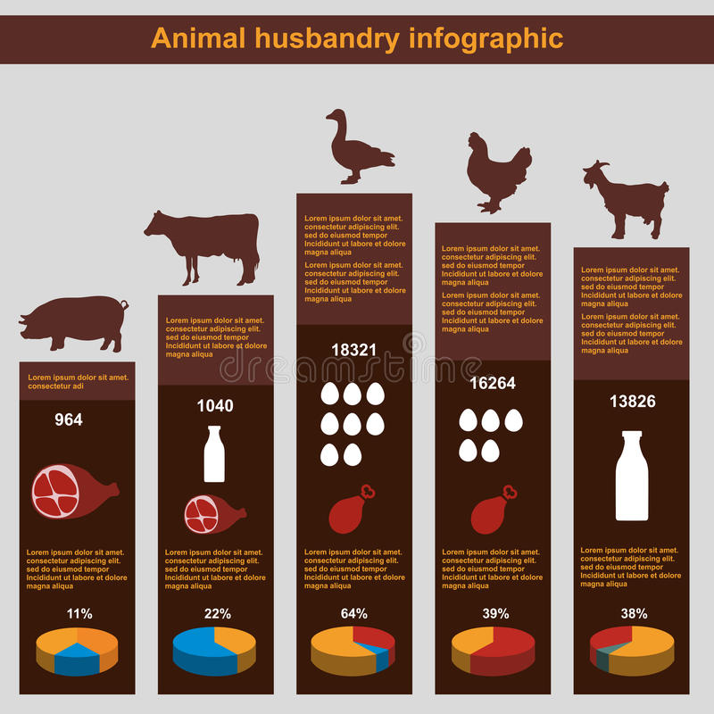 infographic的畜牧业,农业,平的设计,元素 库存例证