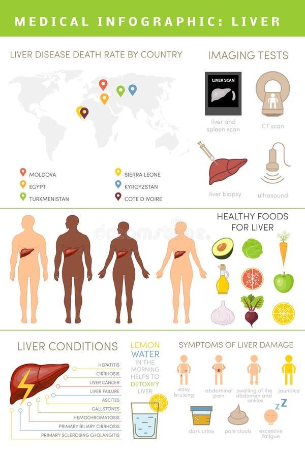 infographic的肝脏 皇族释放例证
