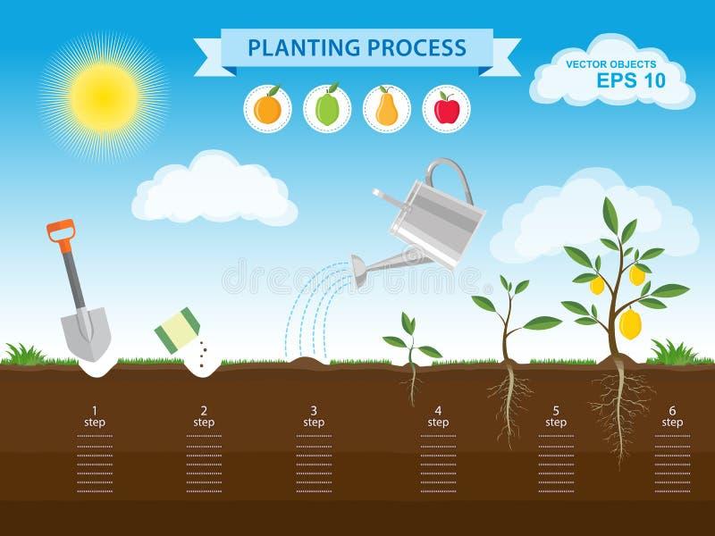 Infographic begrepp för vektor av att plantera process i plan design Hur man växer trädet från kärna ur i det trädgårds- lätta st vektor illustrationer