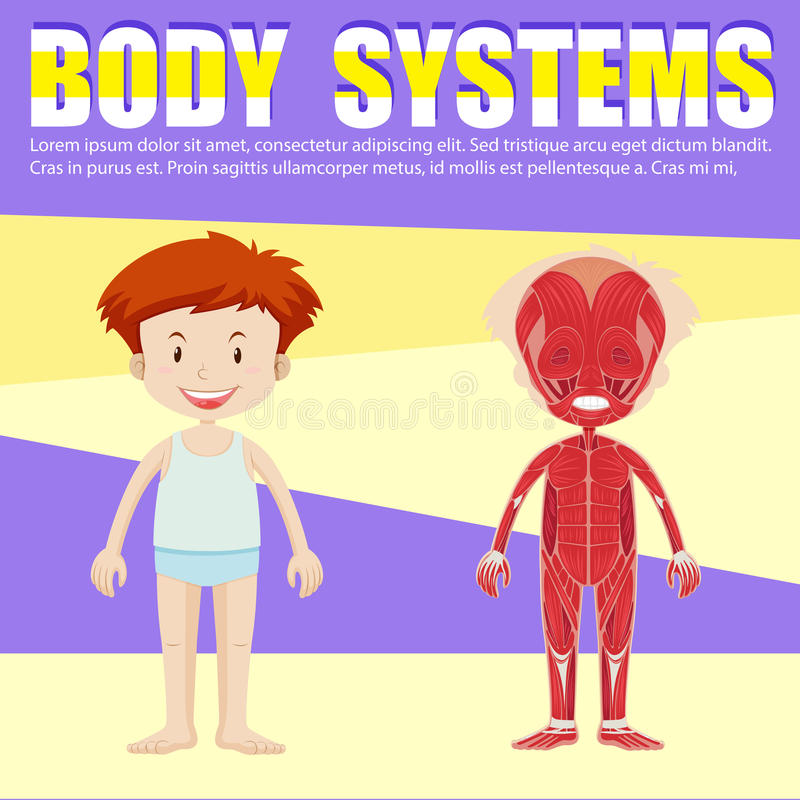 Infographic of boy and body diagram stock vector illustration of download infographic of boy and body diagram stock vector illustration of kids human ccuart Images