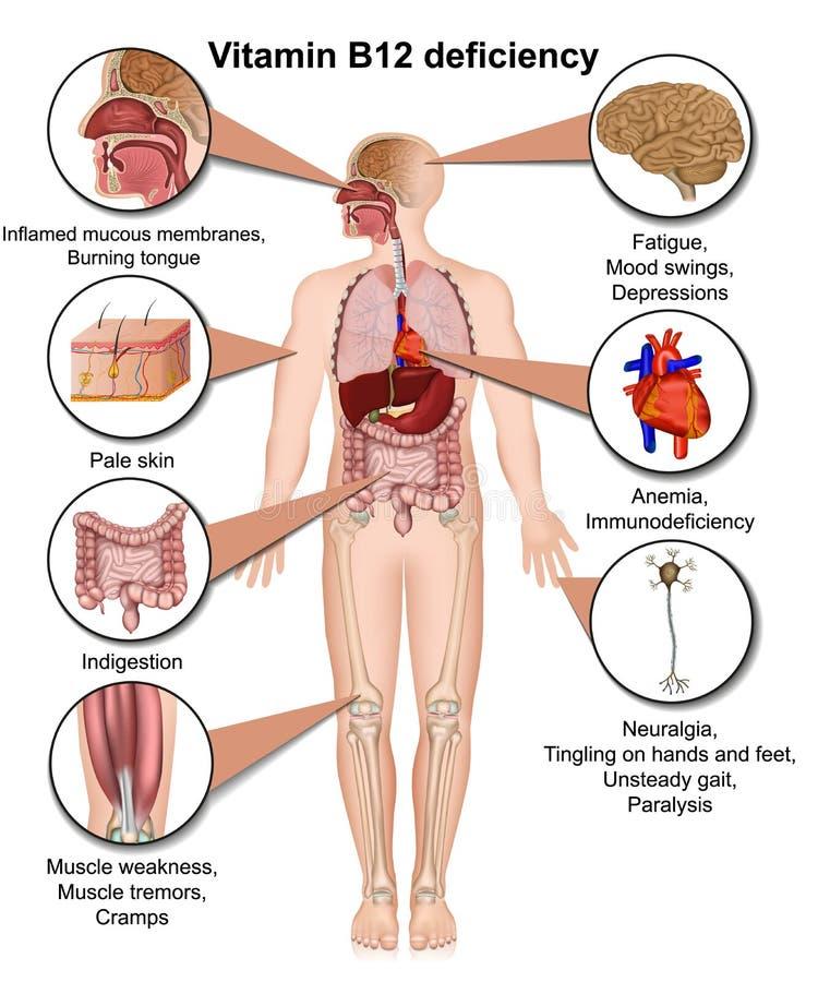 Infographic brist för vitamin B12, medicinsk illustration för vektor 3d på vit bakgrund stock illustrationer