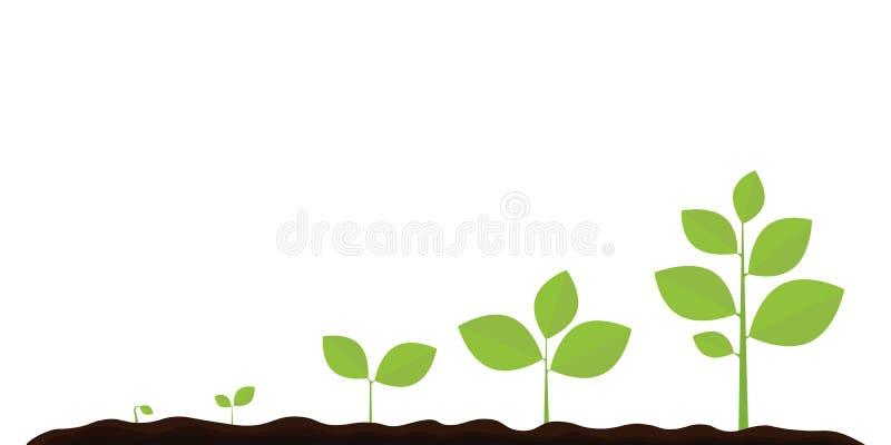 Infographic de plantar el ?rbol Planta que cultiva un huerto del alm?cigo Brote de las semillas en tierra Brote, planta, iconos c ilustración del vector
