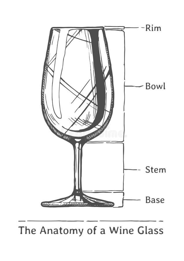 Infographic del vetro di vino illustrazione vettoriale