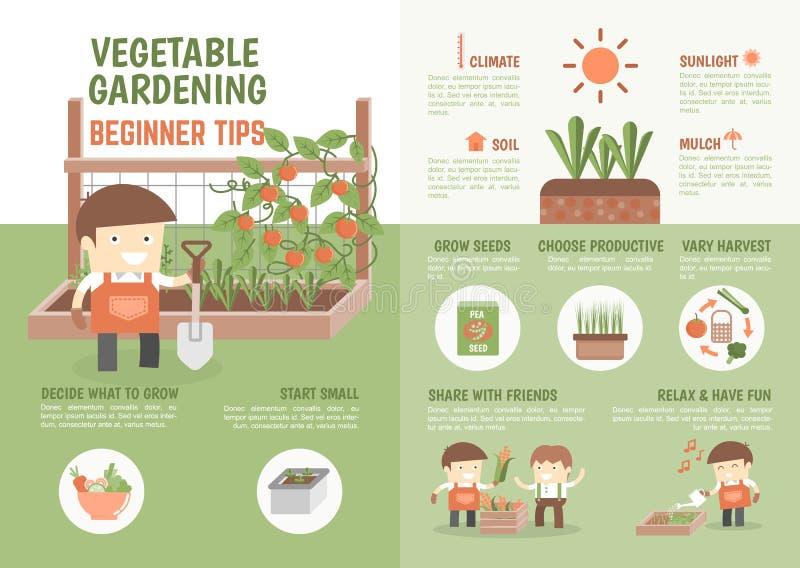 Infographic hur man växer grönsaknybörjarespetsar vektor illustrationer