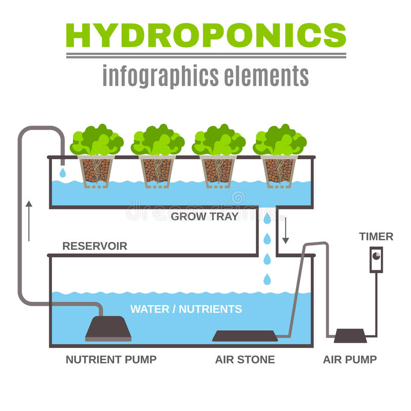 Infographic Hydroponic ilustracja royalty ilustracja