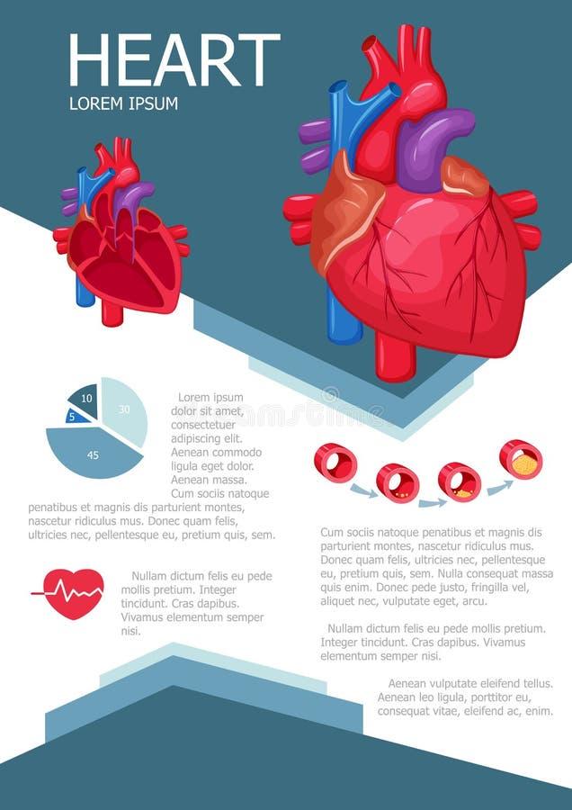 Infographic mänsklig hjärta vektor illustrationer
