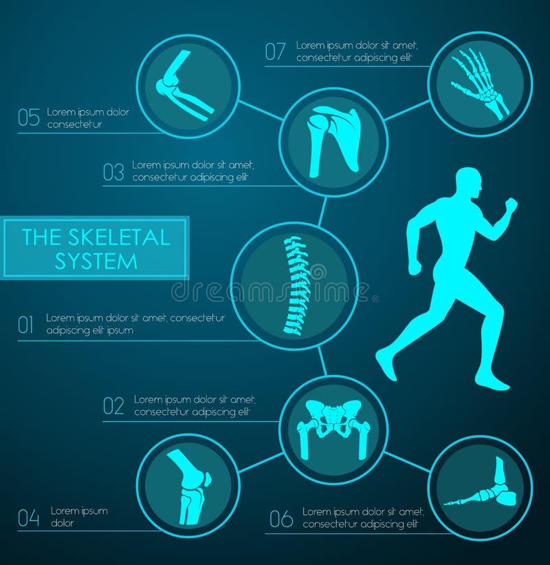 Infographic médico do sistema esqueletal humano ilustração royalty free