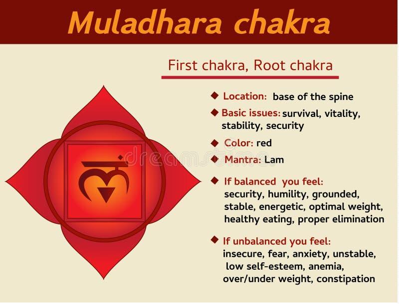Infographic Muladhara chakra Rota chakrasymbolbeskrivningen och särdrag, först Information för kundaliniyoga royaltyfri illustrationer