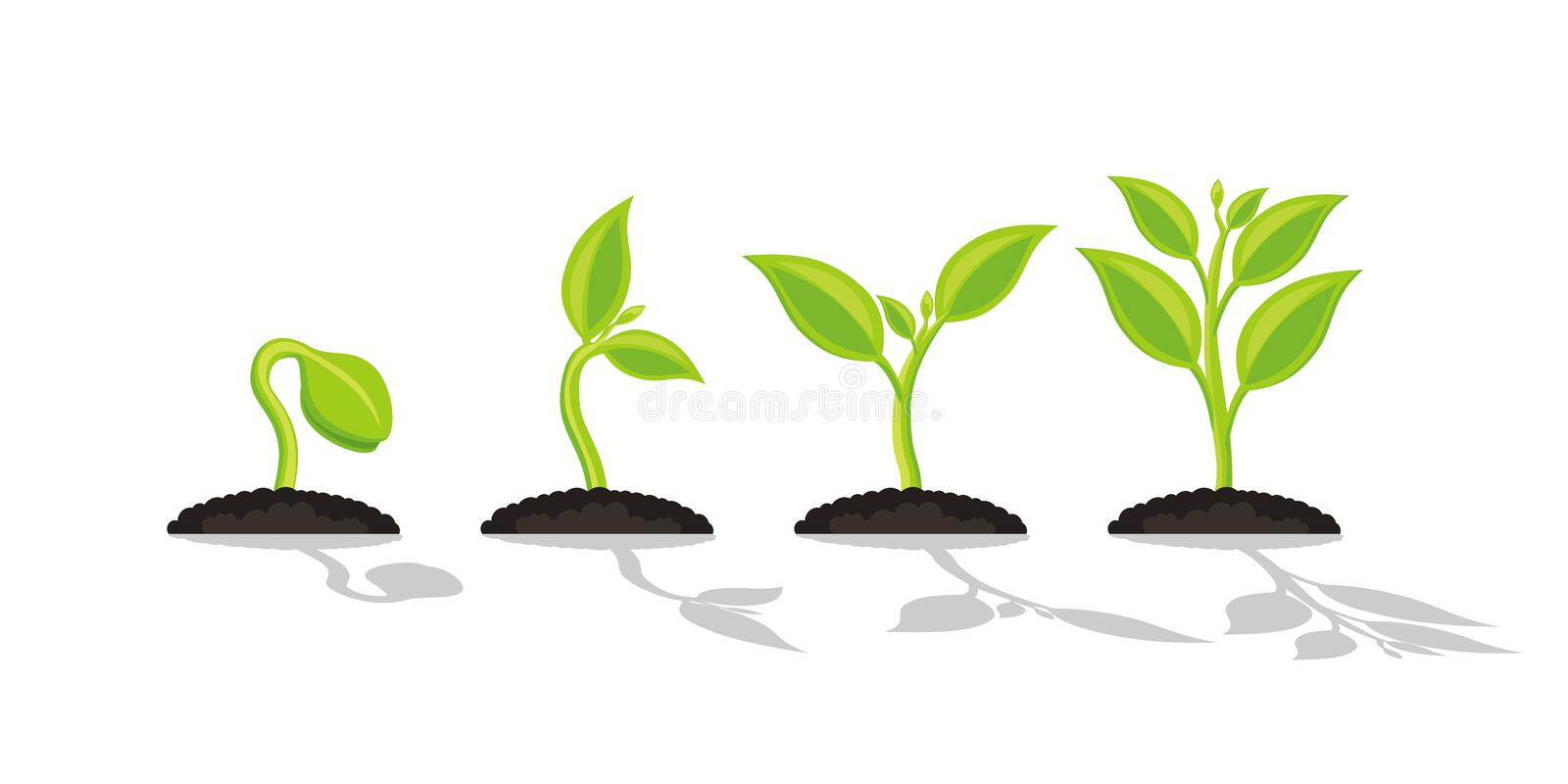 Infographic of planting tree. Seedling gardening plant. Seeds sprout in ground. Sprout, plant, tree growing agriculture icons. stock illustration