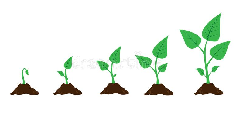 Infographic of planting tree. Seedling gardening plant. Seeds sprout in ground. Sprout, plant, tree growing agriculture icons. Vec vector illustration