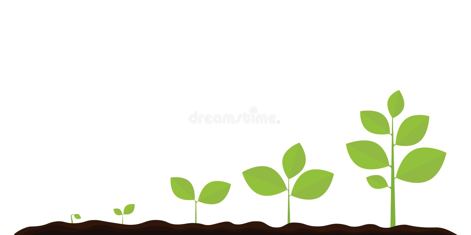 Infographic of planting tree. Seedling gardening plant. Seeds sprout in ground. Sprout, plant, tree growing agriculture icons. vector illustration