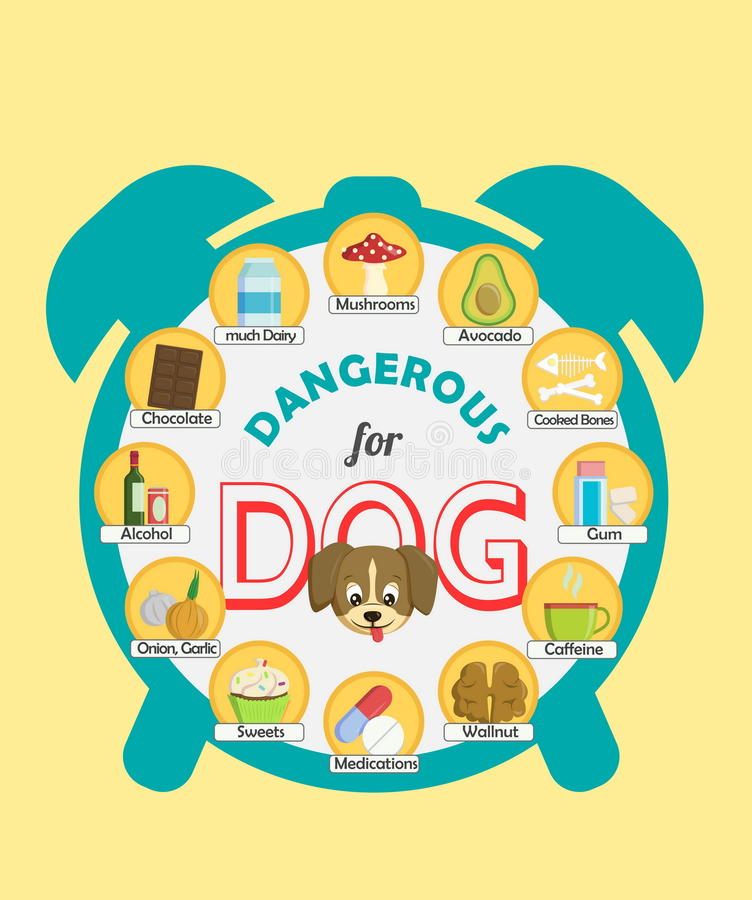 Infographic poster about food and snacks that are dangerous for your dog and may cause intoxication. A set of icons royalty free illustration