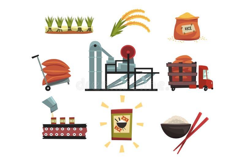 Infographic-Schablone der Reisproduktion von Bearbeitung zu Endproduktbearbeitung, Trockner, erntend stock abbildung