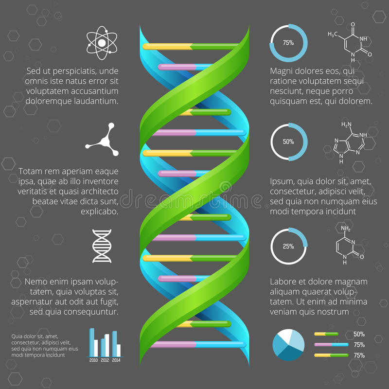 Infographic template with DNA structure for. Medical and biological research. Genetic health, life evolution, model line helix, vector illustration vector illustration