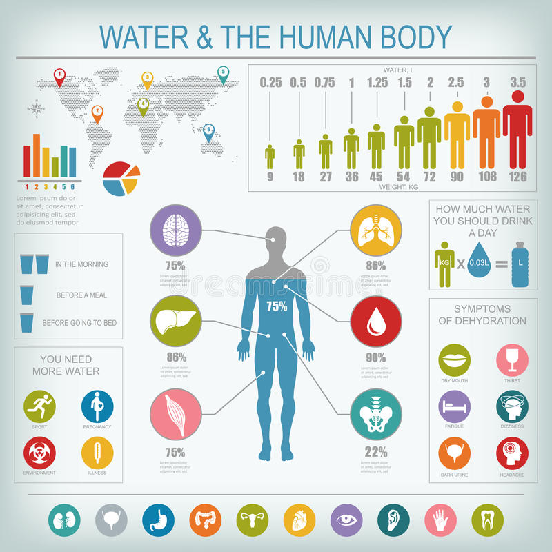 Infographic vatten och människokropp stock illustrationer