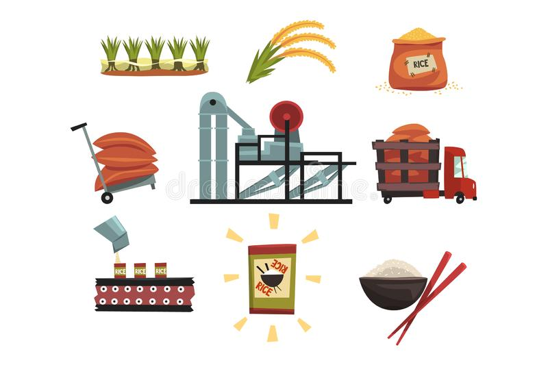 Infographicmalplaatje van rijstproductie van cultuur aan afgewerkt productcultuur, het drogen, het oogsten stock illustratie