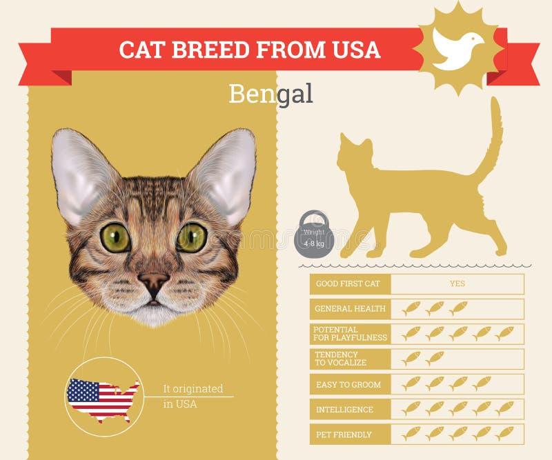 Infographics φυλής γατών της Βεγγάλης διανυσματική απεικόνιση