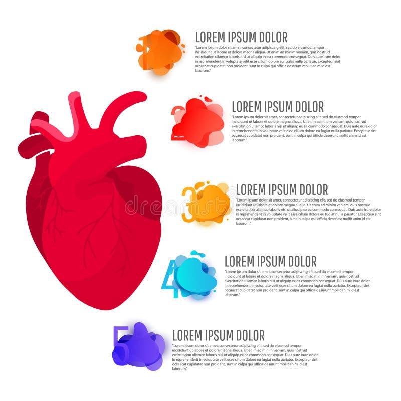 Infographics концепции человеческой иллюстрации анатомии медицинское органа сердца красного человека с круглыми элементами с текс бесплатная иллюстрация