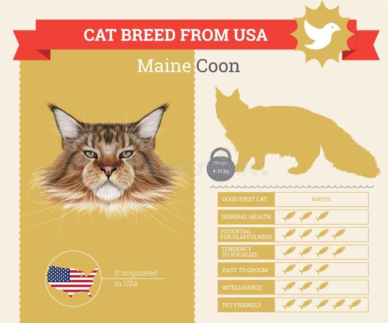 Infographics породы кота енота Мейна иллюстрация штока