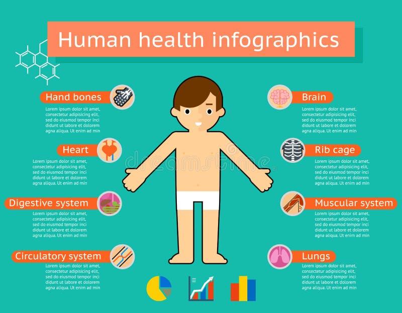 Infographics систем человеческого тела медицинское бесплатная иллюстрация