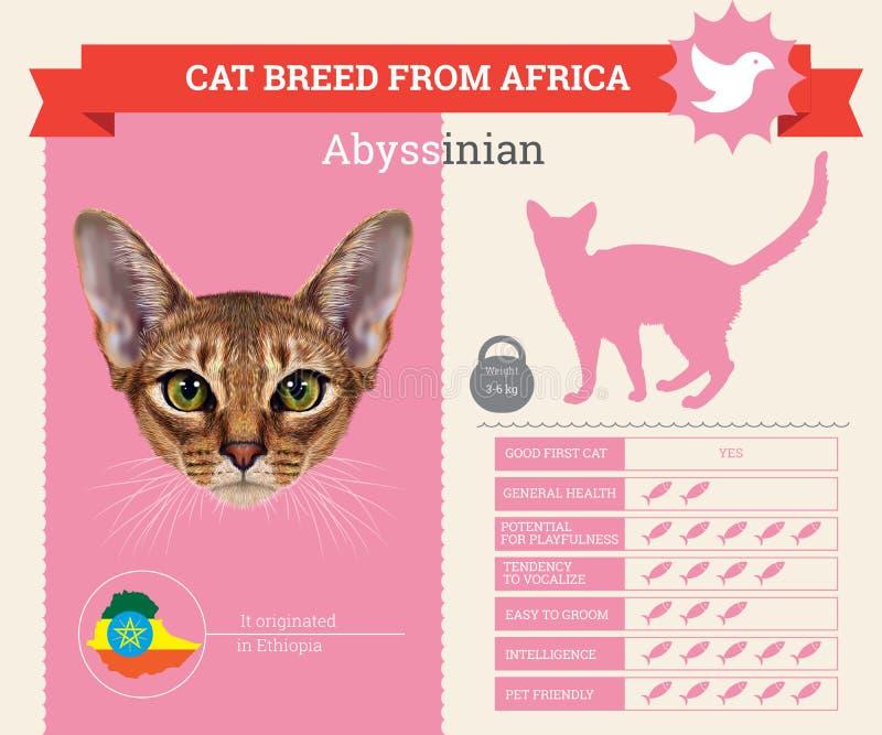 Infographics abisinio de la raza del gato ilustración del vector
