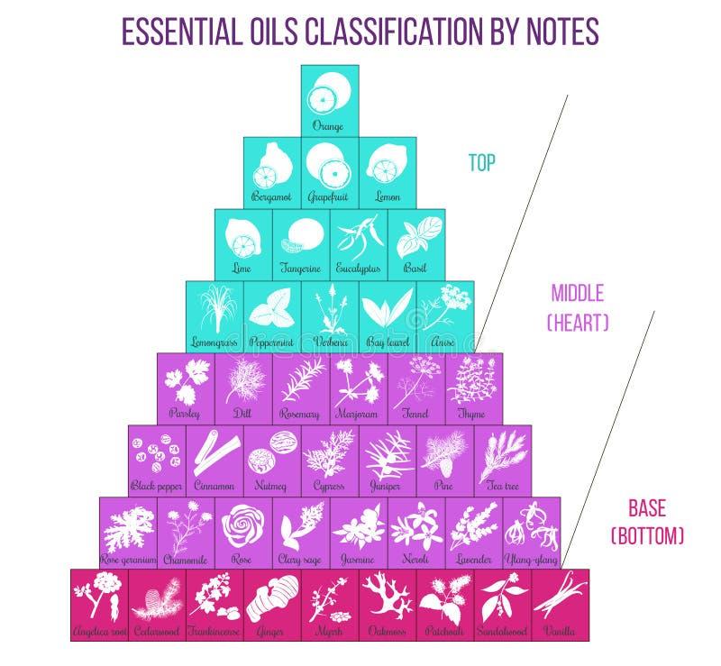 Infographics Aromatherapy και ταξινόμησης ουσιαστικών πετρελαίων απεικόνιση αποθεμάτων