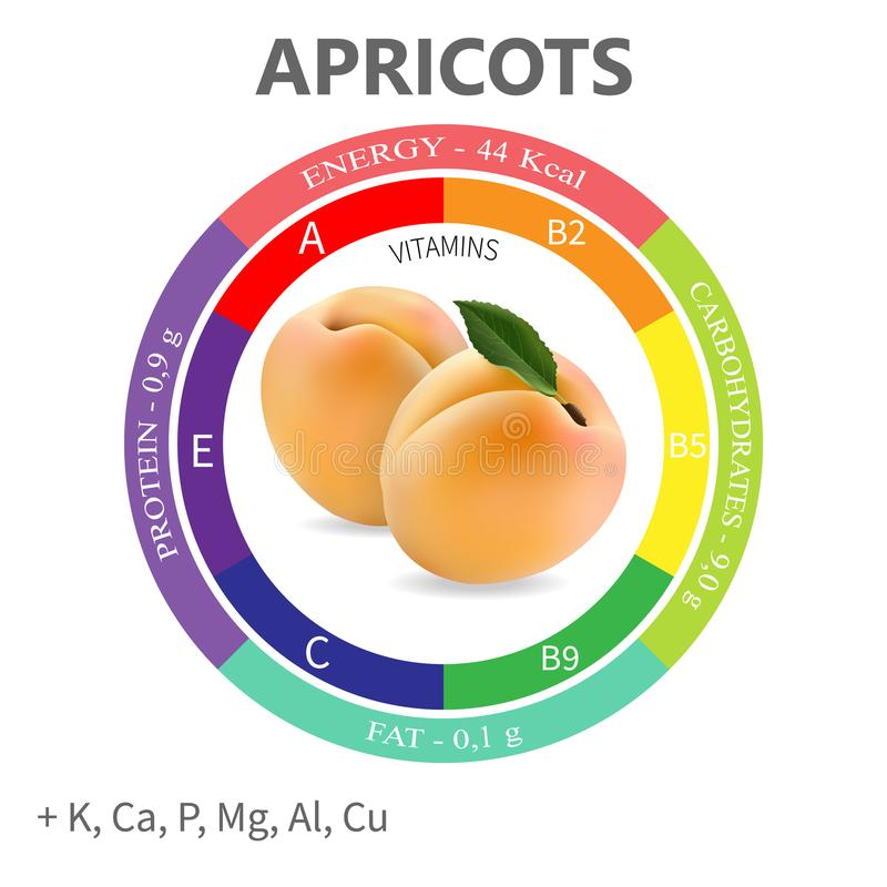 Infographics about the beneficial properties and nutrients in apricots. Protein, fats, carbohydrates, vitamins and minerals. Delicious fruit in a realistic royalty free illustration
