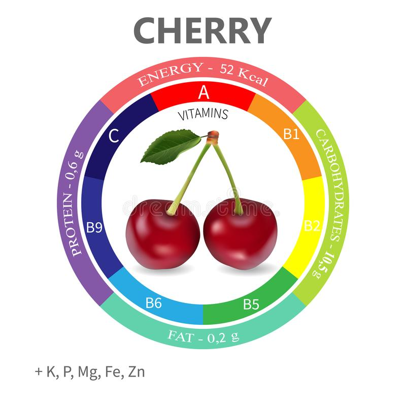 Infographics about the beneficial properties and nutrients in cherry. Protein, fats, carbohydrates, vitamins and minerals. Delicious fruit in a realistic style vector illustration