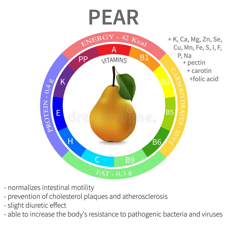 Infographics about the beneficial properties and nutrients in pear, protein, fats, carbohydrates, vitamins and minerals. Delicious royalty free illustration