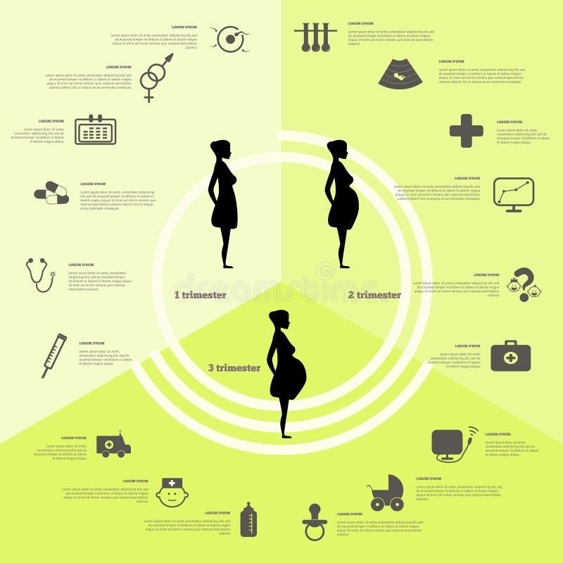 Infographics da gravidez e do nascimento, fases da gravidez ilustração do vetor