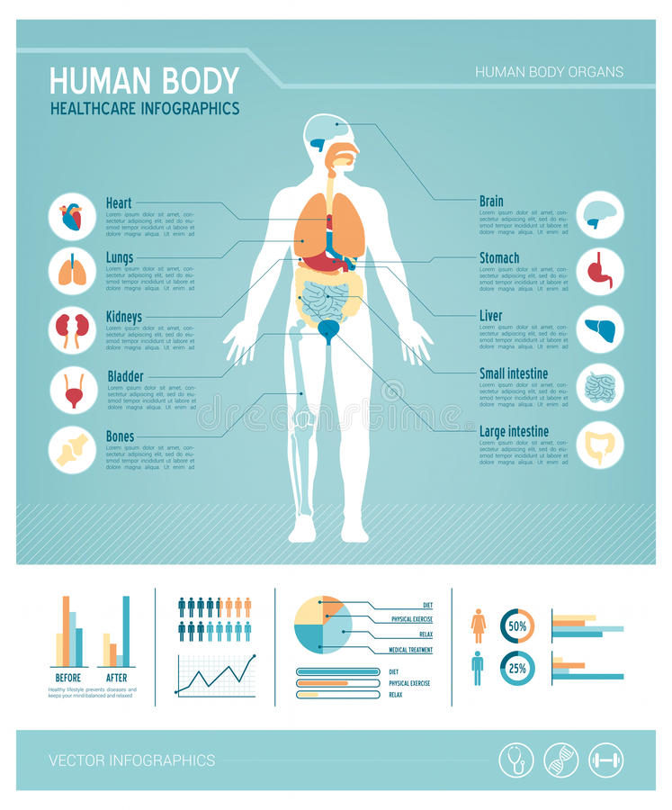 Infographics de corps humain illustration de vecteur