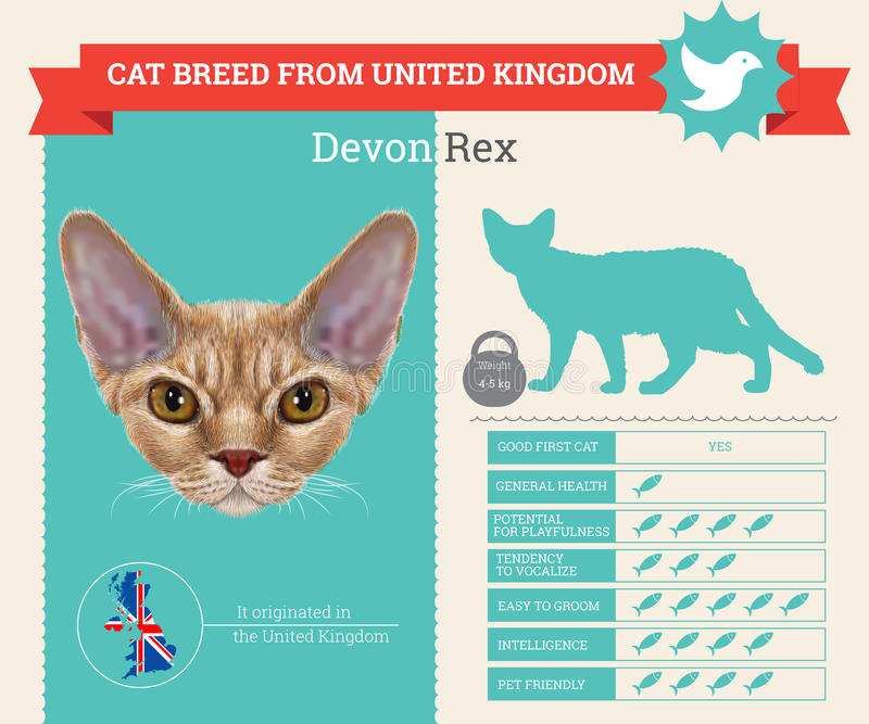 Infographics de la raza de Devon Rex Cat stock de ilustración