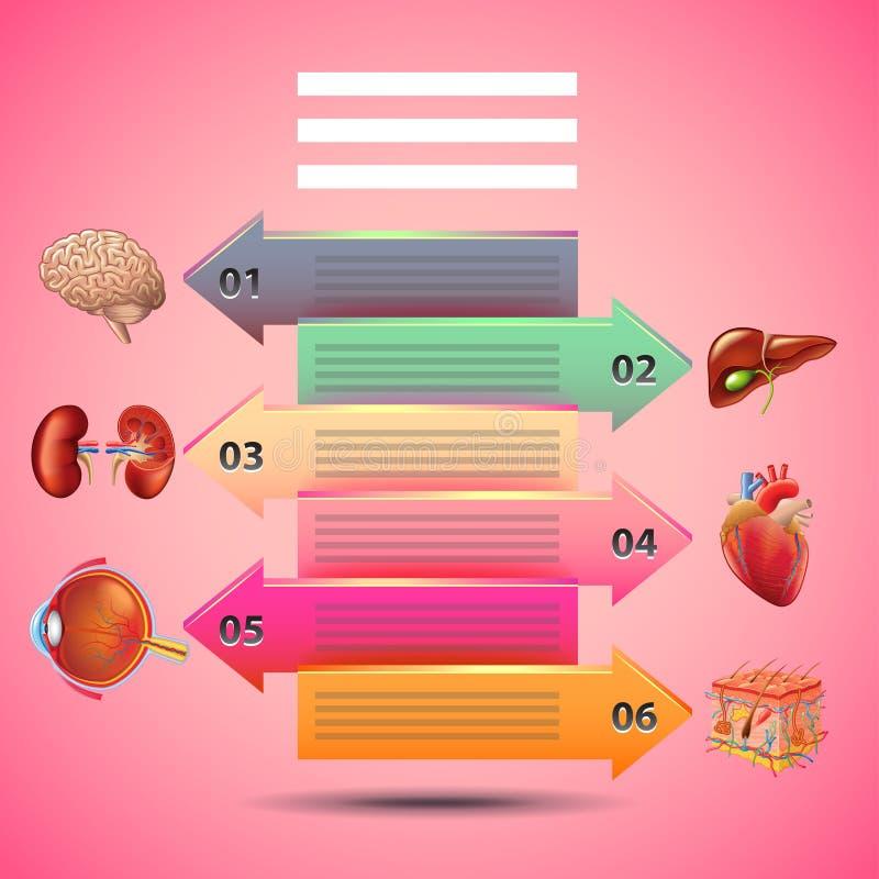 Infographics de la Science avec des flèches et des organes humains, fond rose illustration stock