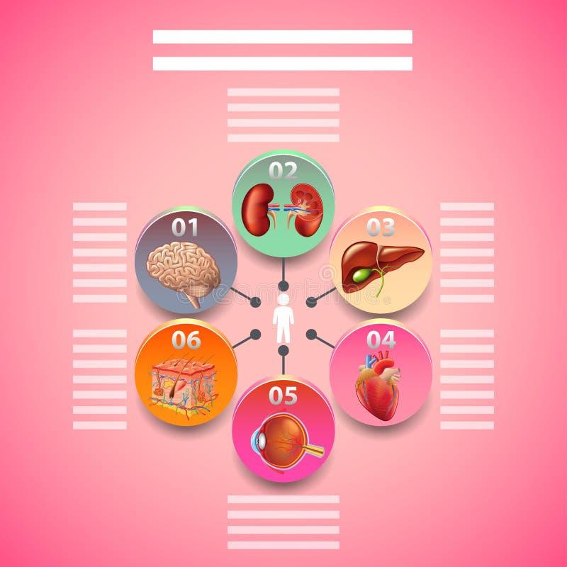 Infographics de la Science avec les organes humains en cercles illustration de vecteur