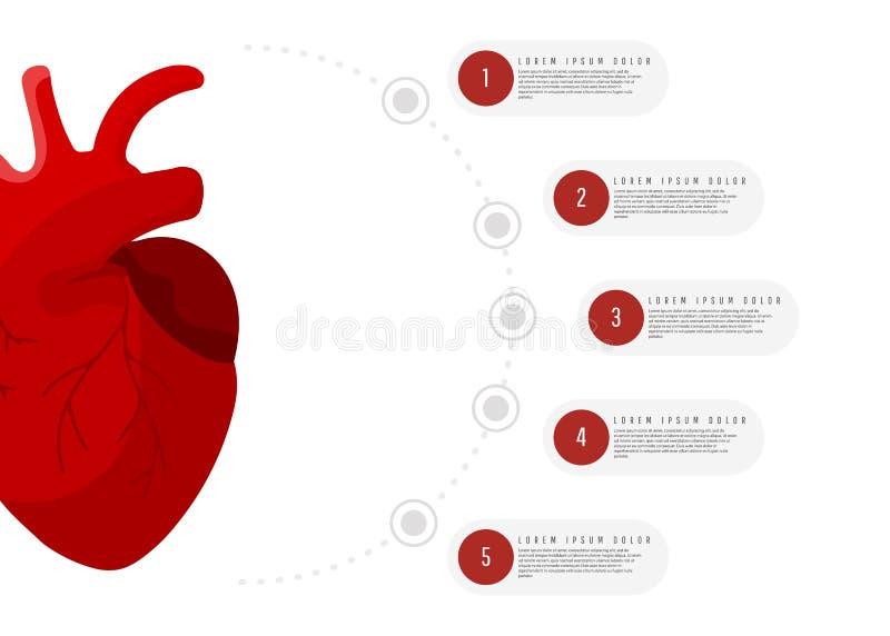 Infographics médico do conceito do órgão do coração do homem vermelho com elementos redondos com texto no fundo branco ilustração royalty free