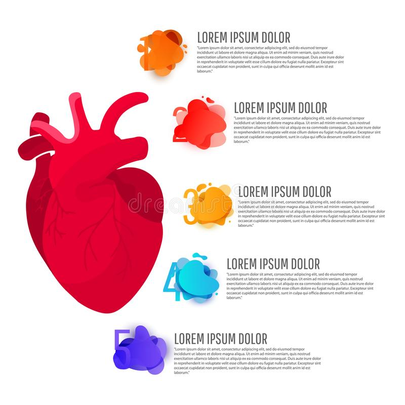 Infographics médico do conceito da ilustração humana da anatomia do órgão do coração do homem vermelho com elementos redondos com ilustração royalty free