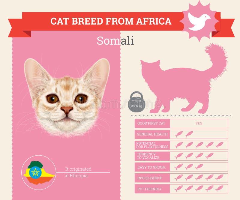 Infographics somalí de la raza del gato libre illustration
