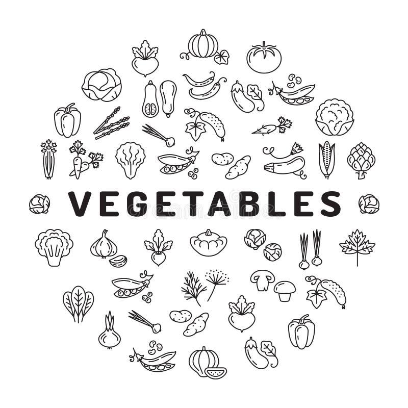 Infographics vegetal do círculo do ícone Coleção mega de símbolos isolados dos vegetais ilustração stock